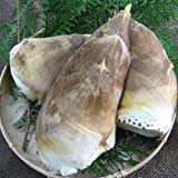 和歌山県産朝堀たけのこ(ぬか付き) 約4kg 4月中旬頃よりご注文順に発送