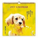 日本ホールマーク 2017年 カレンダー 毎日がスタートライン犬 壁掛け 大 706098