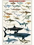 ポスター Dangerous Sharks 2082