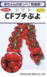 【種子】トマト CFプチぷよ コート種子約11粒