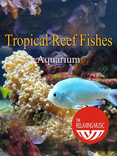 Tropical Reef Fishes Aquarium