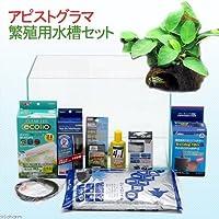 charm(チャーム) (水草)アピストグラマ繁殖用水槽セット 【生体】