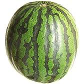 送料無料!(一部地域除く) 秀品大玉西瓜 1玉 6~8kgサイズ