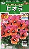 サカタのタネ 実咲花6707 ビオラ フルーナ アプリコットシェード 00906707