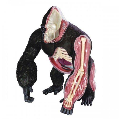 立体パズル 4D VISION 動物解剖 No.27 ゴリラ 解剖モデル