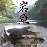 産地直送 生きたまま発送!川魚の女王岩魚(イワナ/いわな)鮮魚《養殖》塩焼きに最適 酸素代込み 10匹セット