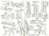 決定版 犬・猫に効くツボ・マッサージ 指圧と漢方でみるみる元気になる 画像