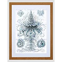 Nature Jellyfish Ernst Haeckel Germany Biology Vintage Framed Wall Art Print 自然ドイツ生物学ビンテージ壁