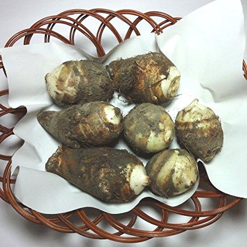 里芋(さといも) 約500g 福岡産