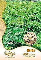 1オリジナルパック20のレンゲハーブ植物の種子、ハーブやレンゲの種