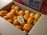 フルーツyamakiti 有田産 田村みかん ご試食価格 SーLサイズ混合 5キロ