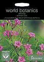 【輸入種子】 Johnsons Seeds world botanics Ipomoea quamoclit Rose ワールド・ボタニクス アイポミア(るこう草) クアモクリト・ペンナータ・ローズ ジョンソンズシード