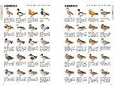 決定版 日本のカモ識別図鑑: 日本産カモの全羽衣をイラストと写真で詳述 画像