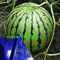 vonly Watermelon Seeds Citrullus Lanatus Seeds Many Varieties Optional Sweet Taste of Fruits and Vegetables Seeds - 50 Pcs: 1