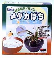 ヒカリ (Hikari) メダカ鉢