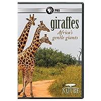 Nature: Giraffes: Africa's Gentle Giants [DVD] [Import]