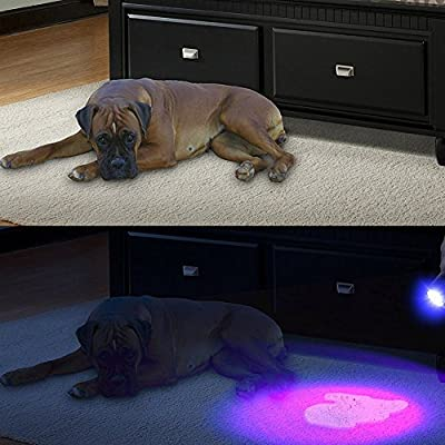 UV Flashlight blacklight torch 51 LED Super Bright Powerful Black Light Torch Ultraviolet Blue light CHECK FOR NITS/LICE Detect for Dog Cat Animal rodent Urine Pet Stains on carpets rugs floors walls car home. Bed Bugs or stains in Hotels. Check Currency.