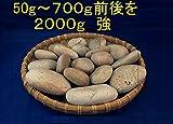 【薬石苑】 即発送!姫川薬石 特小~大サイズ 2000g4