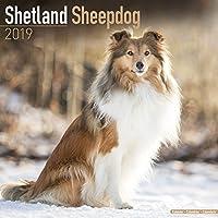Shetland Sheepdog Calendar 2019 (Square)