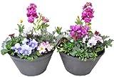 【お買い得商品】季節の鉢植え プラケース(8号鉢) 雛壇タイプ【2個セット】