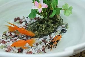 美濃焼金魚鉢にエサのいらない金魚3匹セット