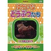 ゆかいなどうぶつたち ~モルモット・ウサギ・リス~ [DVD]