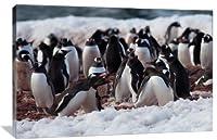 ペンギンFight印刷onギャラリーWrappedキャンバス壁アート 20x13 19042-AC