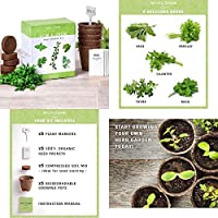 有機種子だけでなく、植物:自然の花の庭 - 有機種子から成長して100 SEEDS。フェリーでガーデニング