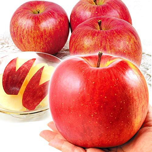 国華園 山形産 大玉 ふじ 「でかふじ」 5kg1箱 りんご