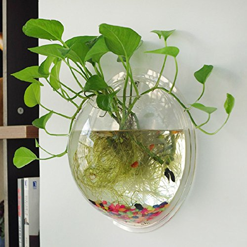 壁掛け水槽 アクアリウム 観葉植物を入れて 植木鉢 金魚鉢 花瓶 半球型 観賞魚 観葉植物 3mmの厚さ Broadroot (透明)