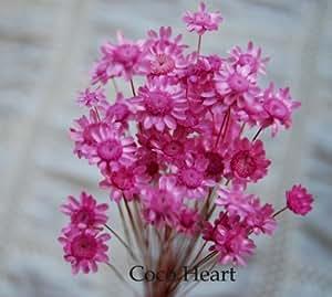 ~Coco Heart~ スターフラワーブロッサム ストロベリー 50本 (木の実・ドライフラワー)