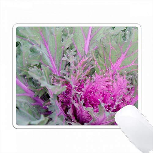 ニューヨーク、ラインベック。緑と紫の装飾ケールの詳細。 PC Mouse Pad パソコン マウスパッド