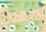 手すりの虫観察ガイド: 公園・緑地で見つかる四季の虫 画像