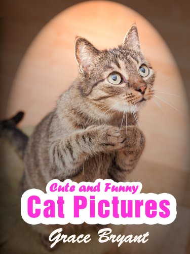 amazon funny cat pictures the most cute and hilarious cat