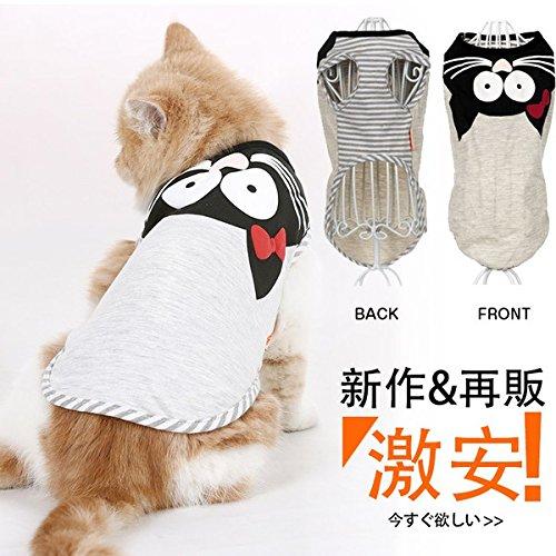 MomoKing 猫...