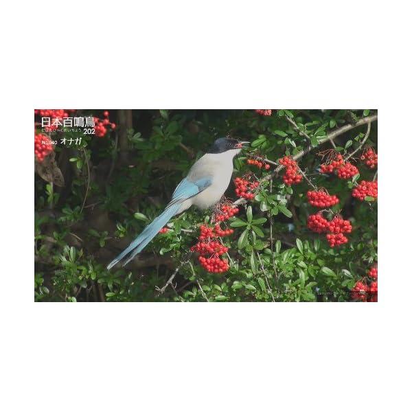 シンフォレストBlu-ray 日本百鳴鳥 20...の紹介画像8