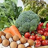 朝ごはん本舗 九州野菜と卵セット 九州野菜10品以上
