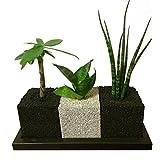 【eco-pochi】エコポチ・キューブトゥーリオ 観葉植物系 (角型ミニ3個セット) 竹炭やシラスを使った観葉植物用ポッド