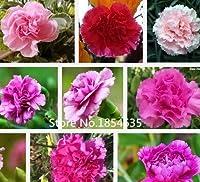 色とりどり:庭の植物庭の植物簡単に育てる植物盆栽カラフルなカーネーション花の種(混合色)100粒子盆栽Se