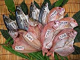 佐賀関 灰干し 干物 (冷凍) 新鮮 高品質 旨い 産地直送 極上ギフト大分県