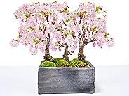 盆栽妙 桜 さくら並木の情景盆栽 50152A338