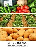 野菜本来の味!!安心安全旬菜野菜セットLサイズ