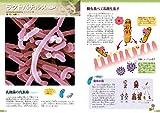 細菌 (ずかん) 画像