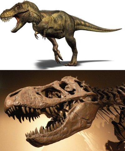 《最高品質》ティラノサウルスレックス 歯の化石(43ミリ)