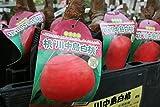 【果樹苗】【接木】 桃 川中島白桃 一年生 【送料込価格】