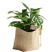 プチプラお値打ち♪ スタンダード麻シリーズ【選べるミニグリーン】 (コーヒーの木)