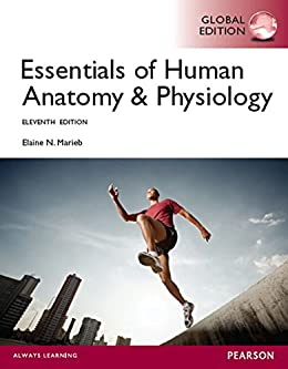 Essentials of human anatomy physiology global edition ebook essentials of human anatomy physiology global edition by marieb fandeluxe Gallery