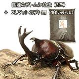 (昆虫)国産カブトムシ幼虫(3匹) + XLマット カブト用 10リットル(説明書付) 本州・四国限定[生体]