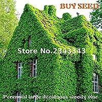 種子パッケージ: 100個/袋赤、DIYの家の庭の装飾、屋外の植物の種子用のグリーンシード2017新しいS * Sementesマルチカラー