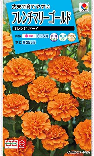 タキイ種苗 フレンチマリーゴールド オレンジボーイ